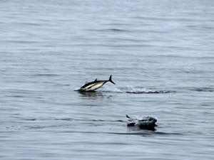 albacore-tuna2